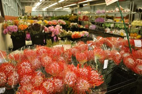 garden state flower market garden state flower market 28 images what to see at