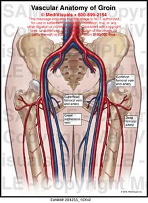 groin anatomy diagram vascular anatomy of groin illustration medivisuals