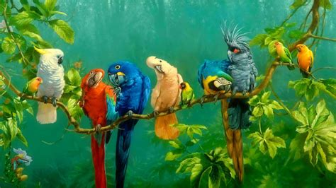colorful parrot wallpaper parrots wallpapers wallpaper cave