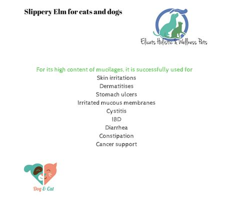 slippery elm for dogs slippery elm for cats and dogs elicats holistic pets