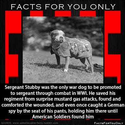 Sergeant Stubby Information Facts For You Only Sergeant Stubby Was The Only War To Be