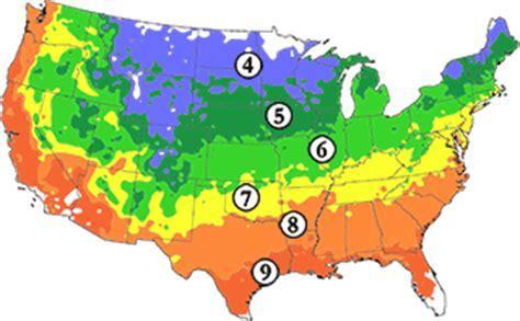 cherry tree usda zone buy affordable american hazelnut shrub corylus americana