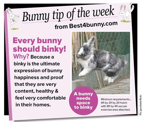 Must For The Week The House Bunny by 44 Best Rabbit Care Images On House Rabbit