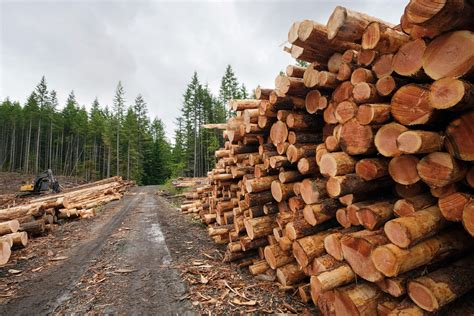 woodwork companies finding logging and timber companies