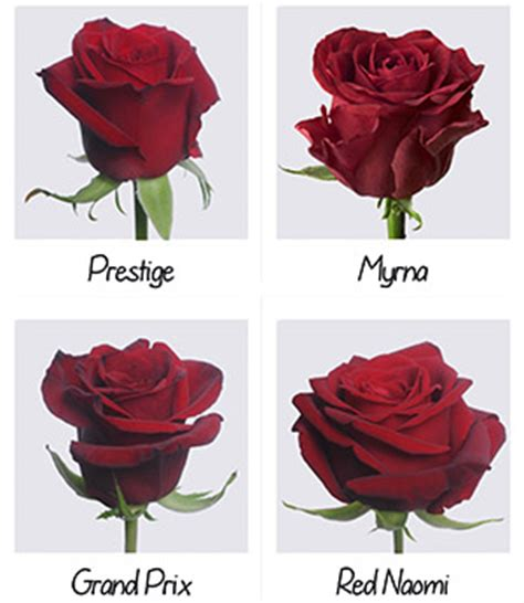 types of reds the flower delivery company auckland