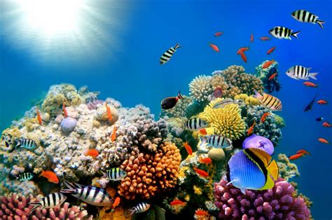 coral reef color bright colors of the coral reef jigsaw puzzle in the