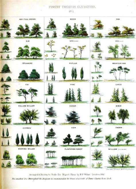 type of trees tree facts top 20 facts about trees facts net