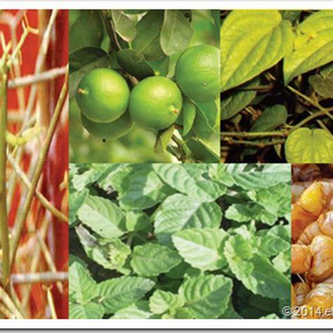 membuat obat bius dari tumbuhan eltelu contoh cara membuat kolase dari bahan limbah