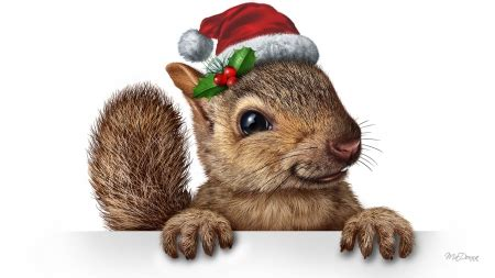 christmas squirrel rodents animals background wallpapers  desktop nexus image