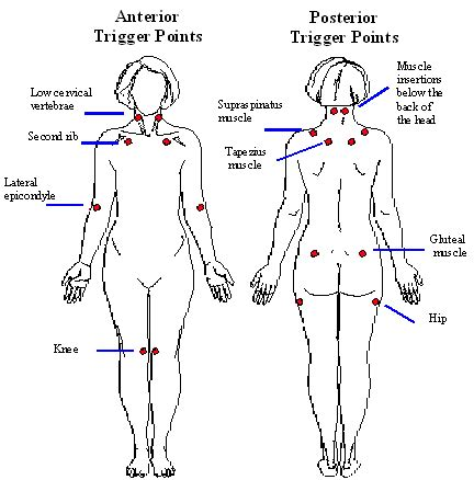diagram of pressure points on the human human teeth diagram human free engine image for user