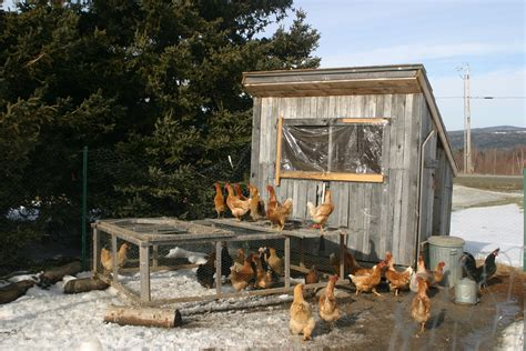 10x10 Kitchen Floor Plans by Quick And Easy Ways To Clean A Chicken Coop Coops And Cages