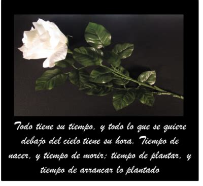 im 225 genes con frases de p 233 same para descargar gratis flores bellas frases para condolencias hermosas im 225