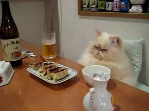 cat dinner cat at the dinner table