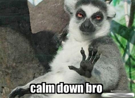calm down bro | really ghey blog