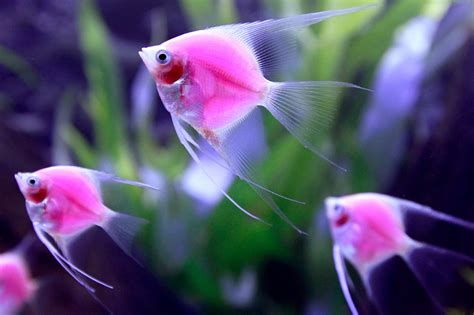 Fish Glow In The fish glow vibrant the sea picture amazing animals
