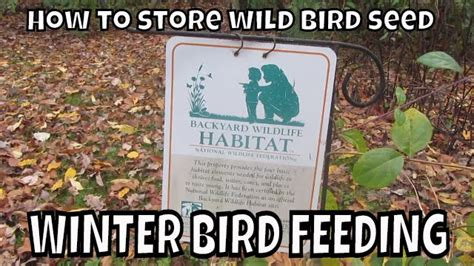 how to store wild bird seed winter bird feeding