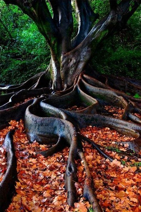 roots of style do you live in a minimalist traditional house beautiful trees with roots www pixshark com images