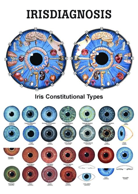 the basics of iridology 3 markings books anatomy poster iridology irisdiagnosis