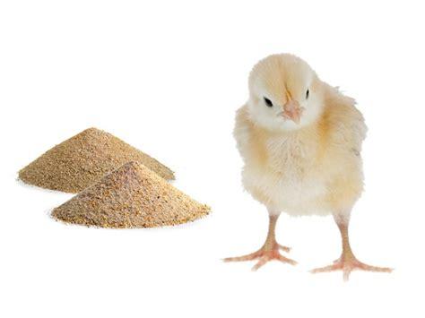 volatili da cortile vendita mangime per animali da cortile e volatili a