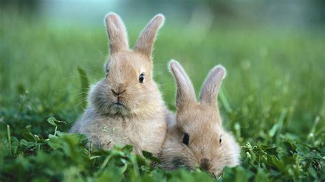 cute rabbit themes your wallpaper cute rabbit wallpaper