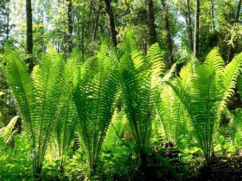 gardens inspired fantastic ferns
