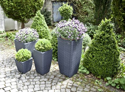 macetas colgantes belleza decorativa natural westwing