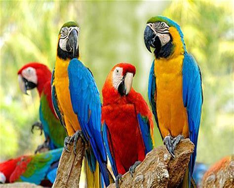 macaw parrot weneedfun