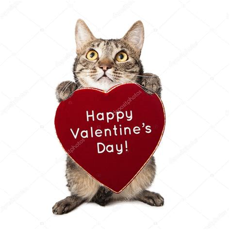 happy valentines day cat cat with valentines day stock photo