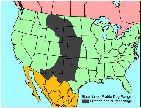 where do prairie dogs live map prairie range breeds picture
