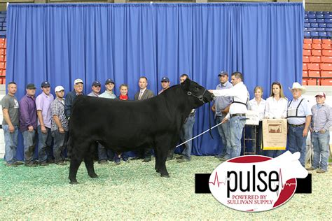 Animal Sweepstakes - simmental breeders sweepstakes supreme chion animal the pulse