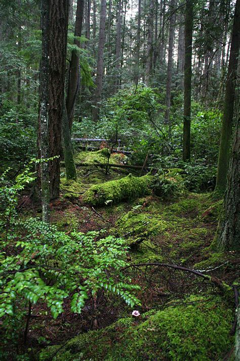 banner forest near port orchard