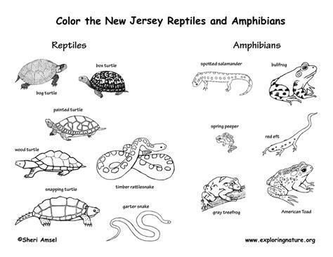 new jersey habitats mammals birds amphibians reptiles