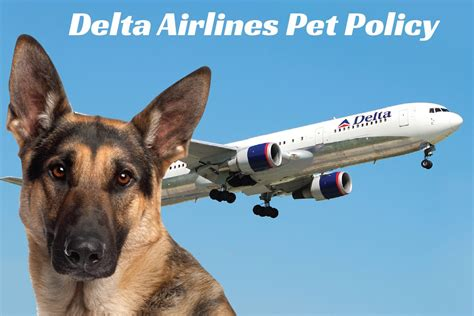 Delta Airlines Pets In Cabin by Flying With Your Pet Delta Pet Policy Certapet