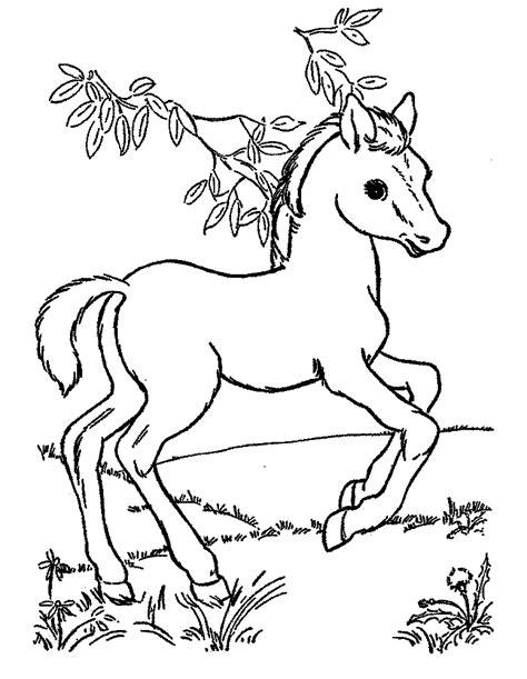 Gambar Anak Kuda Cantik Untuk Diwarnai Murid PAUD dan TK