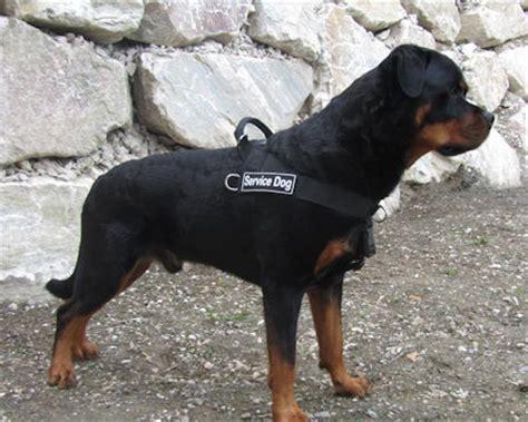 rottweiler service dogs rottweiler harness uk bestseller non pull harness