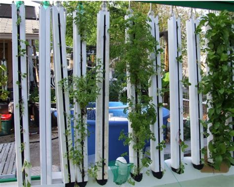chico aquaponic idea  vertical gardening