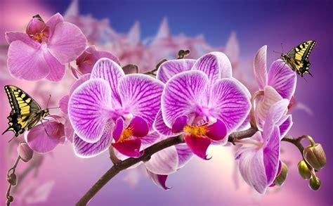 Ordinaire Entretien Des Orchidees D Interieur #1: orchids-866594_960_720.jpg