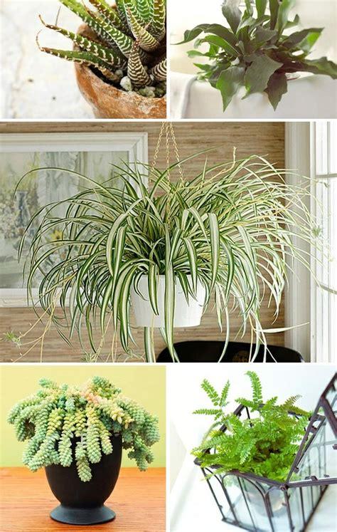 Garten Pflanzen Wenig Licht by Welche Zimmerpflanzen Brauchen Wenig Licht