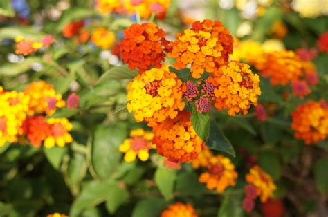 Orange Garden Flowers Free Photo Orange Flowers Orange Flower Free Image On Pixabay 345493