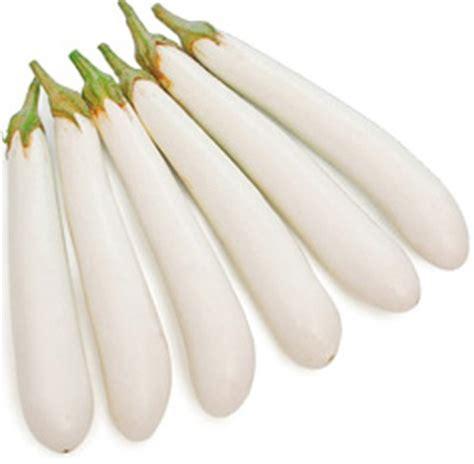 Bibit Terong Manis bibit bunga benih terong putih lazada indonesia