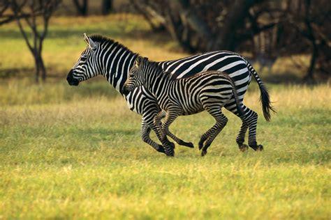 imagenes animales movimiento fotos de animales en movimiento