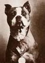 Sergeant Stubby German Pit Bulls From Nannies To Hated Breed Girliegirl Army Girliegirl Army