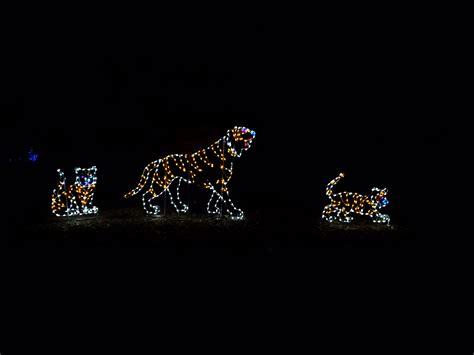 metro zoo lights zoolights lights at the national zoo daycation dc