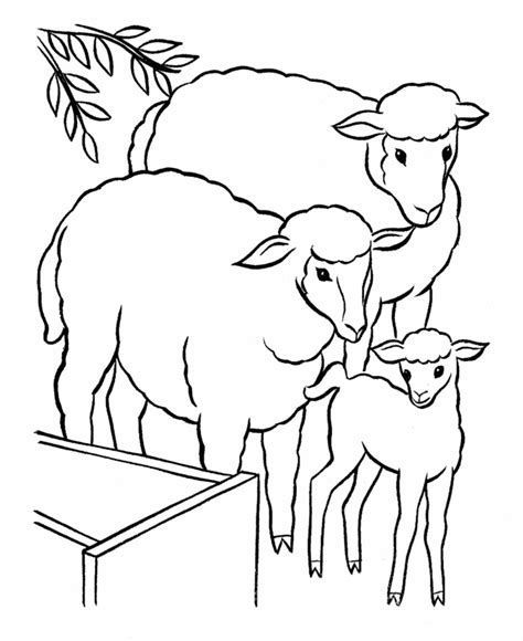 coloring book pages of sheep free sheep coloring pages books for education