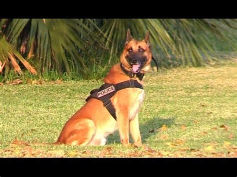 how to to attack on command to on command k9 1 funnydog tv