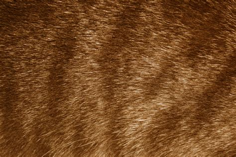 brown fur pattern brown tabby fur texture picture free photograph photos
