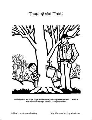 coloring page of sugar maple tree dive into morning with these maple syrup worksheets