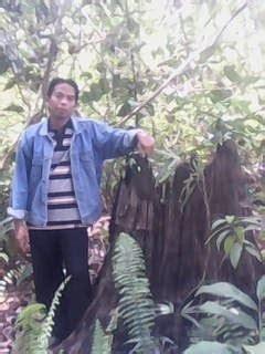 Obat Uban Sari Ulin jual murah minyak buah ulin asli dari kalimantan indonesia