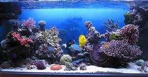 Japanese Aquascape My Shadowbox Background Project Reef Central Online