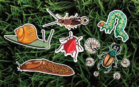 garden pests    rid   naturally readers
